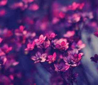 Ce origini au florile oferite primăvara?