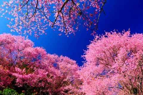 idei pentru savurarea zilelor calde de primăvară