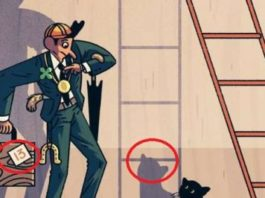 superstiții-pisica si scara