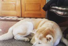 localuri din București care permit accesul câinilor