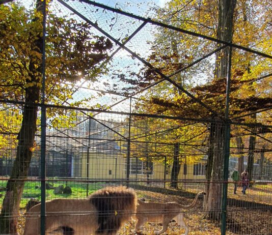 grădina zoologică